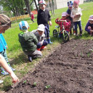 Šeit bērni jau var vērot, kas ir izaudzis, kā arī nogaršot lociņus.